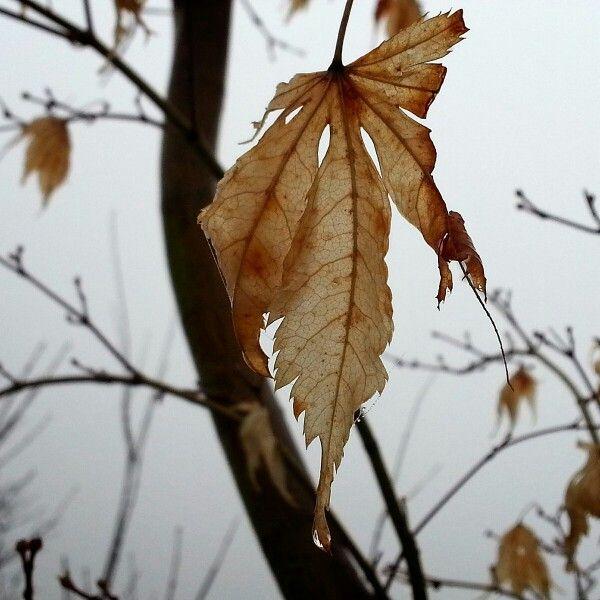낙엽이 젖어있네