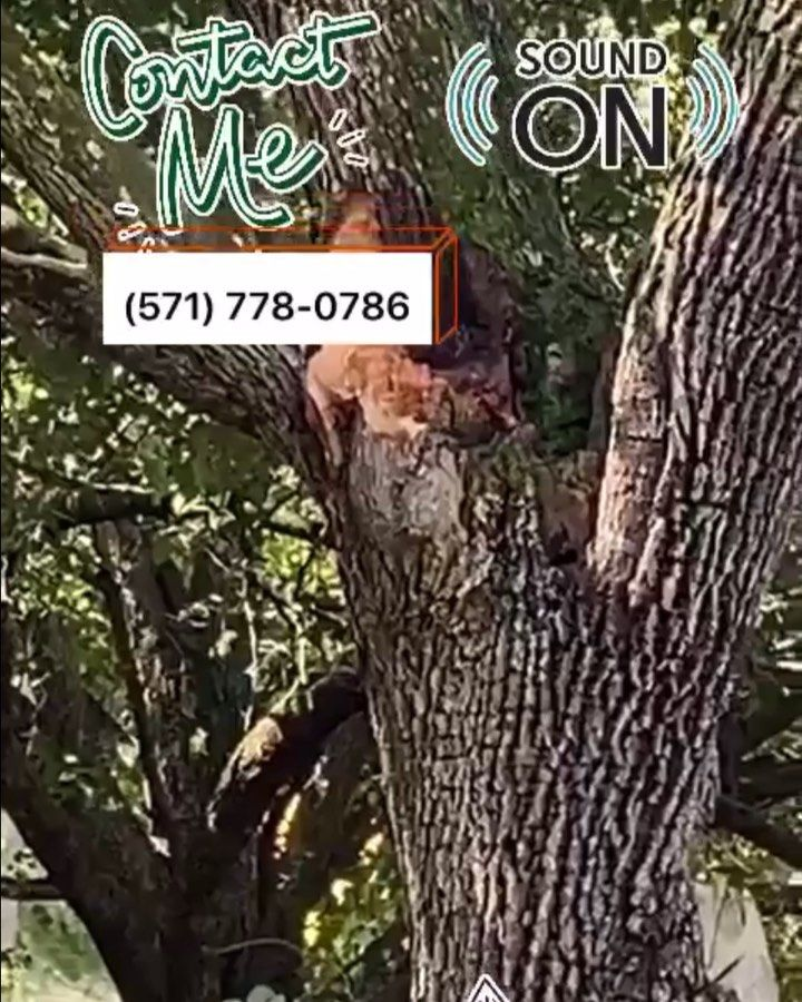 81adfa9f3d4e25e0fdba2b31422e2df7 - Edgar's Gardening And Tree Service