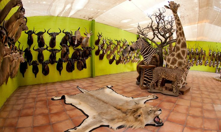 The global revulsion at the killing of Cecil the lion sits uncomfortably with a boom in stuffed specimens in hip galleries and restaurants, The Guardian, 2016