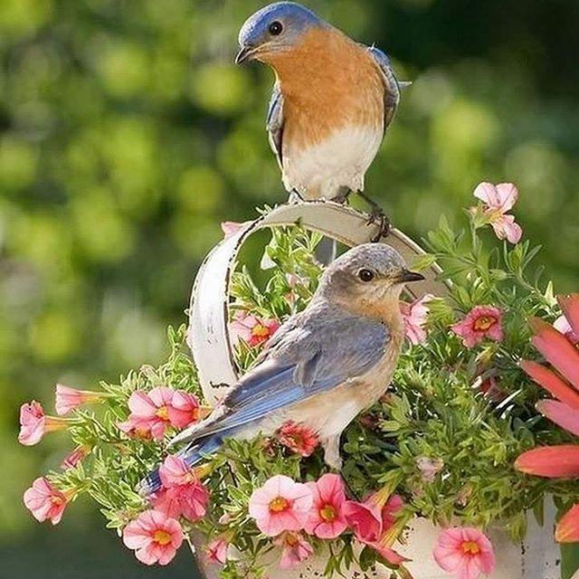 God morgon🍃☕🌸 Oj, vad det regnar☔☔☔ Känns i lederna😕Ha en fin o trevlig Söndag🌻🌼 #intemittfoto #regnigt #reumatismvärk #söndag #fåglar