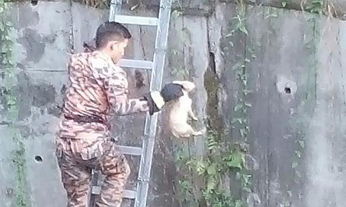 Bomba Menyelamatkan Anak Anjing Jatuh Longkang #bomba #Ampang #wira http://www.kenapalah.com/bomba-menyelamatkan-anak-anjing-jatuh-longkang/