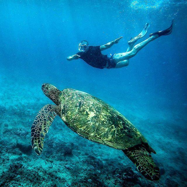 Poipu, Hawaii   https://www.instagram.com/p/BWQdzP8gAkq/   wanderlust,waterworld,islandlife,hawaii,turtle,l4l,gopro,natgeo,nomademag,hawaiitag,beautifuldestinations,nomadjunkies,quebec_travelers,snorkeling,ourlonelyplanet,hilife,lethawaiihappen,neverstropexploring,underwater,livetheadventure,travel,poipu,kauai
