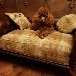Luxury Sofa Beds for Dogs. Featured Collections. Chesterfield Sofas, Traditional Sofas and Chaise Lounge Sofas. | Dog Bed Luxury Pet Sofas