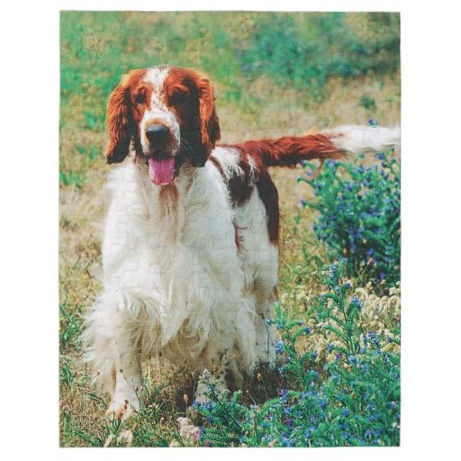 Welsh Springer Spaniel Puzzle. Made of sturdy cardboard and mounted on chipboard, these puzzles are printed in vivid and full color.