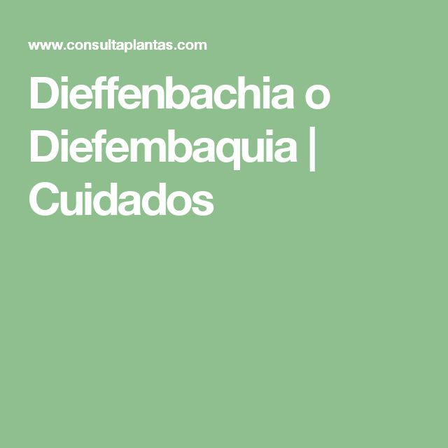 Dieffenbachia o Diefembaquia | Cuidados