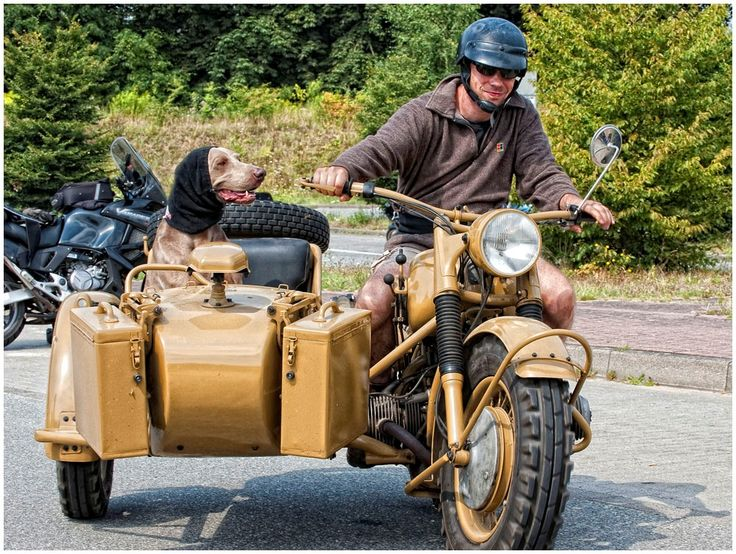17 Best images about dogs + motorcycle sidecars on ...