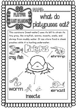 platypus ready to print easy readings and worksheets teacherspayteacherscom