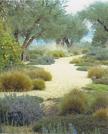 Backyard Garden Inspiration featuring low water demand, olive trees, tuft grasses