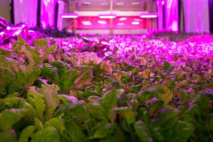 The Plant Chicago aquaponics bed.Vertical Farms, Meatpacking Plants, Pink House, Commercials Kitchens, Fish Hatchery, Hydroponics Gardens, Food Deserts, Chicago, Amazing Photos