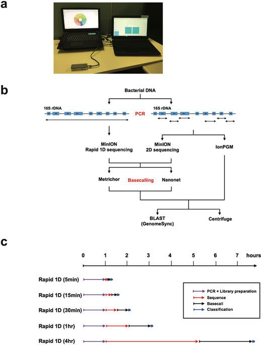 We developed a portable system for 16S rDNA analyses consisting of a nanopore technology-based sequencer, the MinION, and laptop computers, and assessed its potential ability to determine bacterial compositions rapidly. We tested our protocols using a mock bacterial community that contained equimolar 16S rDNA and a pleural effusion from a patient with empyema, for time effectiveness and accuracy. MinION sequencing targeting 16S rDNA detected all 20 of the bacterial species present in the…