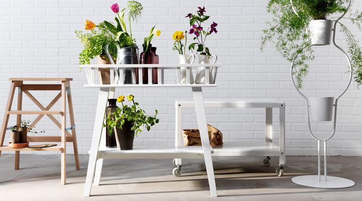 Scaletta, piedistallo e tavolino usati come supporti per le piante.
