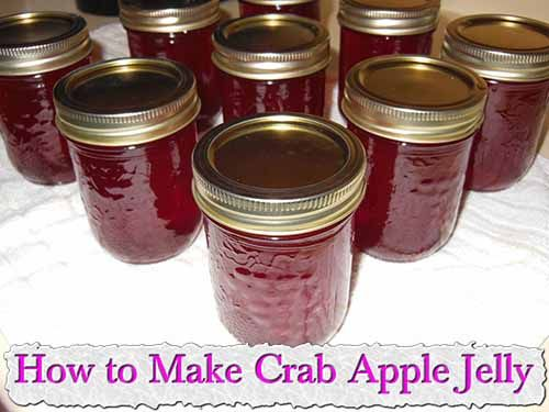 At living green and frugally we aim to provide you with lots of great tips and advice on How to Make Crab Apple Jelly