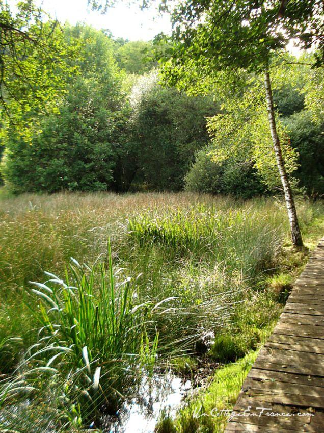 Les marais calme et de beauté - The marshlands, quiet and beautiful- Lac de Saint-Pardoux en Haute-Vienne