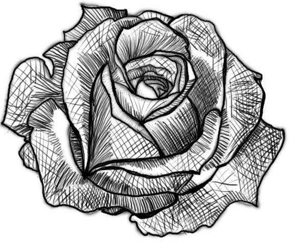 Full Shaded Rose   Roses drawing, Drawings, Flower drawing