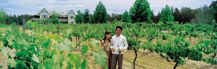 Hunter Valley vineyards. Here I like the semillions :) #WineCountry #HunterValley #Australia #Travel