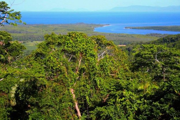 #6 Daintree Rainforest, Australia: Is this your favourite forest? Vote for Daintree Forest, Australia by clicking like and direct messaging us your email address