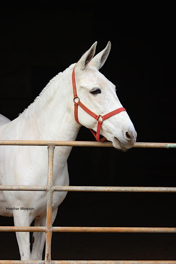 Pretty mule :-)