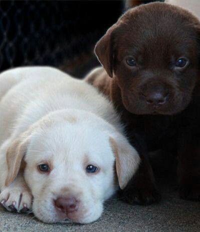 Ohh my goodness! I want both of these little puppies!