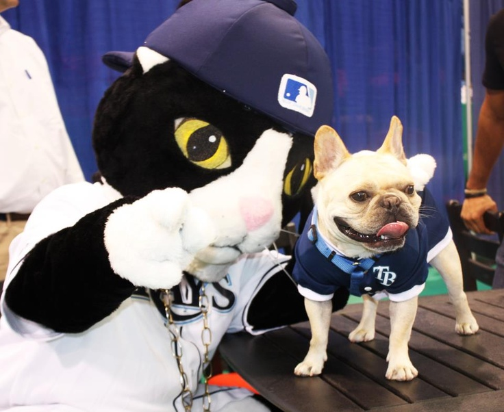 Tampa Bay Rays Fan Fest Today With DJ Kitty And David Prices Dog Astro