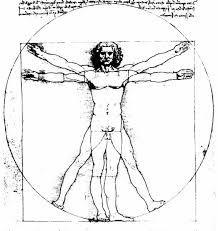 Resultado de imagem para пропорции тела рисунок