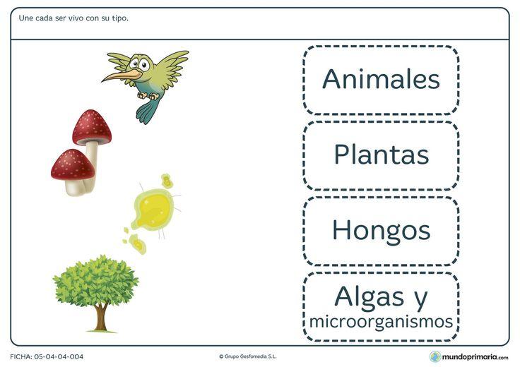 Ficha de tipos de seres vivos para niños de 8 años.Descarga aquí esta ficha para tercero de primaria, ¡Es gratis!