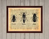 Bees kinds insects wings animal air flying nature print Rustic decor Cabin Vintage Retro poster Dictionary page Home interior Wall 0022