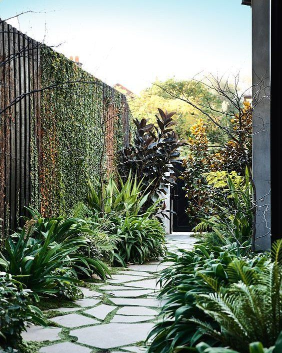 "235 Likes, 3 Comments - Dans Plants | Plant Experts (@dansplants) on Instagram: ""Talk about a pathway to heaven✨ || Repost via @pinterest"""
