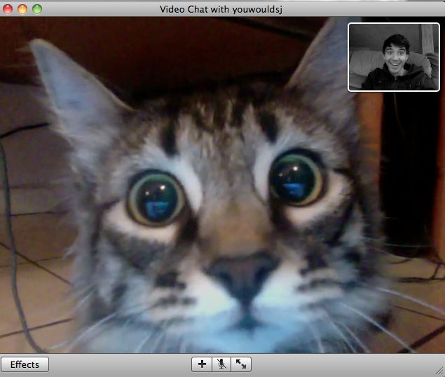0_o: Cats, Laughing, Funny, Videochat, Videos Chat, Cat Faces, Kitty, Cat Videos, Animal