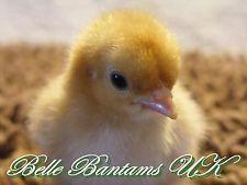 bellebantamsuk2010 on eBay
