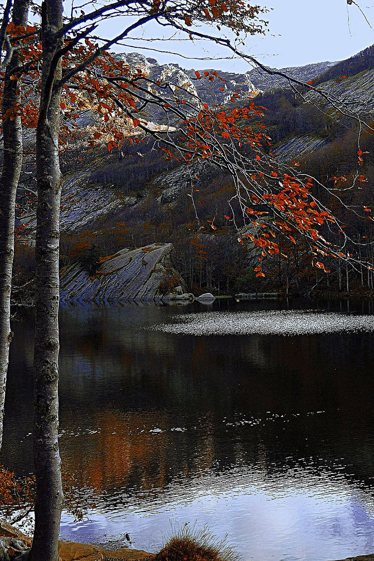 High Val parma Forest  -  The Lagoni Latest colours on lake