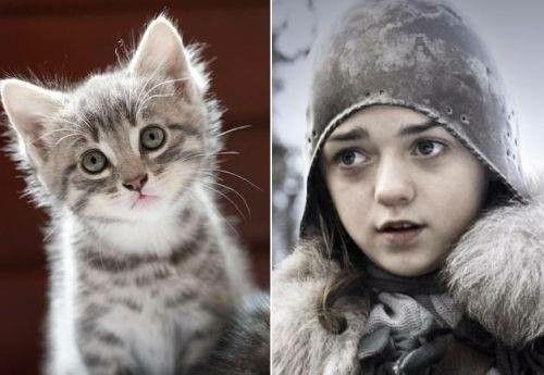 Sevimli Arya :)