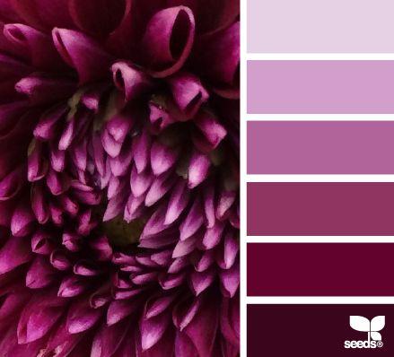 Dahlia Tones - http://design-seeds.com/index.php/home/entry/dahlia-tones