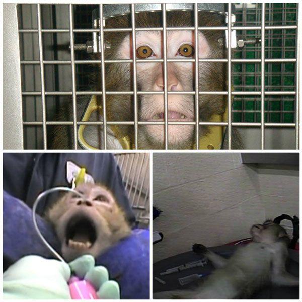 History of animal testing