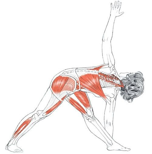 this asana improves the flexibility of the spine, corrects alignment of the shoulders; relieves backache, gastritis, indigestion, acidity, flatulence; massages and tones the pelvic organs, corrects the effects of a sedentary lifestyle or faulty posture, assists treatment of neck sprains, reduces stiffness in the neck, shoulders and knees, strengthens the ankles and tones the ligaments of the arms and legs,The posture stimulates the nervous system