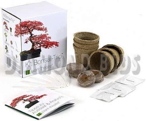 Bonsai-Starter-Trees-Kit-Gift-Idea-Seeds-Growing-Unique-Pot-Plants-Distinctive