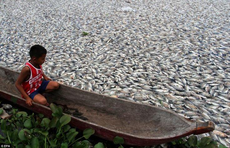 El PH del mar cambia debido a la acidificación que se produce por  a los altos niveles de dióxido de carbono, matando miles de peces.