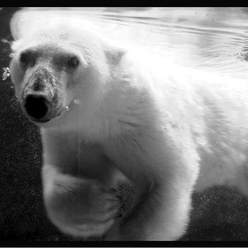 Polar Bear by Nunki
