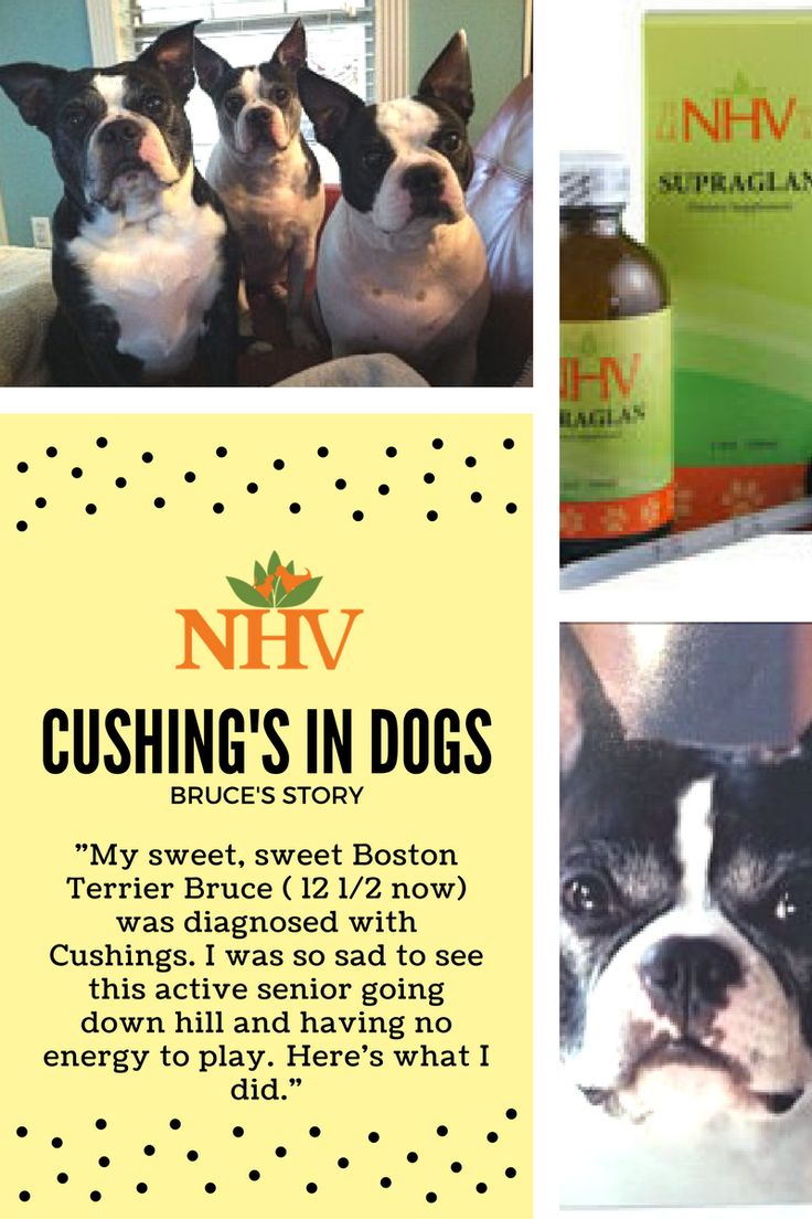 41 Best Cushing S Disease In Dogs Images On Pinterest