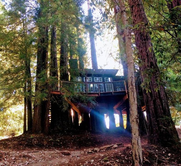 Flapjack Ranch Treehouse: Set up 14 feet high in a fairy ring of redwood trees is the ultimate romantic retreat: your very own king suite tree house. The tree house features large decks, a living room with a skylight and a luxurious four poster king bed looking out over th...