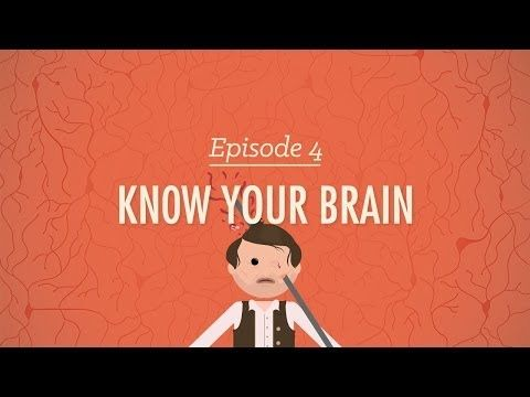 Meet Your Master: Getting to Know Your Brain - Crash Course Psychology #4 - http://myscienceacademy.org/2014/03/01/meet-your-master-getting-to-know-your-brain/ MORE VIDEOS: http://www.youtube.com/user/crashcourse/videos Hank talks us through the Central Nervous System, the ancestral structures of the brain, the limbic system, and new structures of the brain. Plus, what does Phineas Gage have to do with all of this?