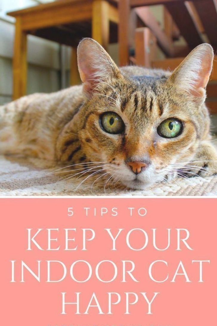 While Many Pet Owners Choose To Let Their Cats Go Outside That S Not Always Possible Indoorkittencare In 2020 Indoor Cat Kitten Care Cat Training