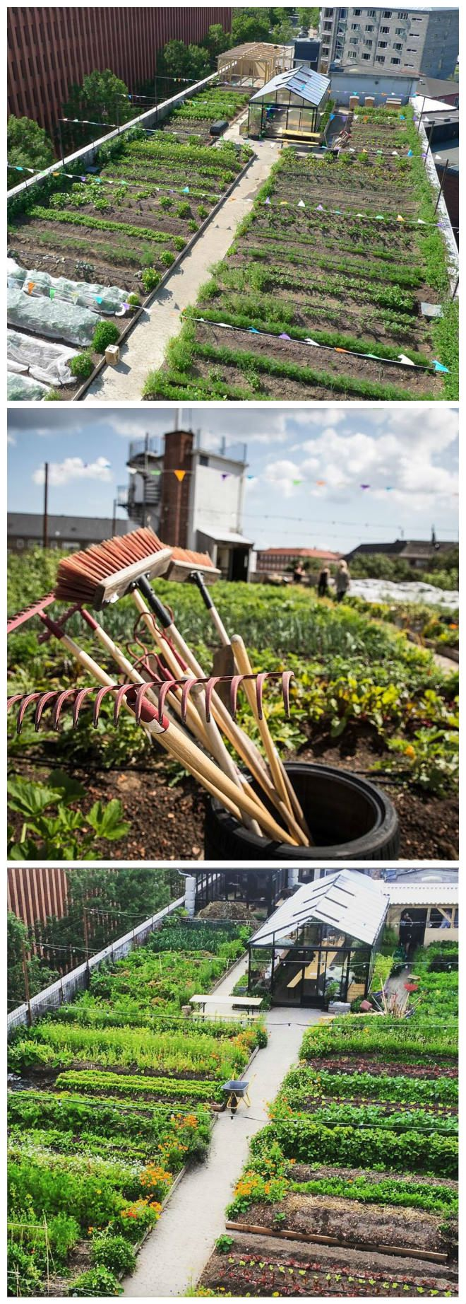 Oestergro, A Urban Farm Landscape Made In Denmark - Landscapes - A 600 m2 organic rooftop garden, five floors above an old car auction –it sounds like a scene from New York, but it is totally Copenhagen. Here in Østerbro, the ØsterGro project, comprising 90 tonnes of soil spread over neat raised beds, is just one example of how urban gardens are turning...