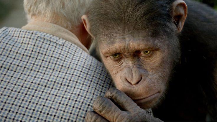Planet Der Affen Revolution Movie4k