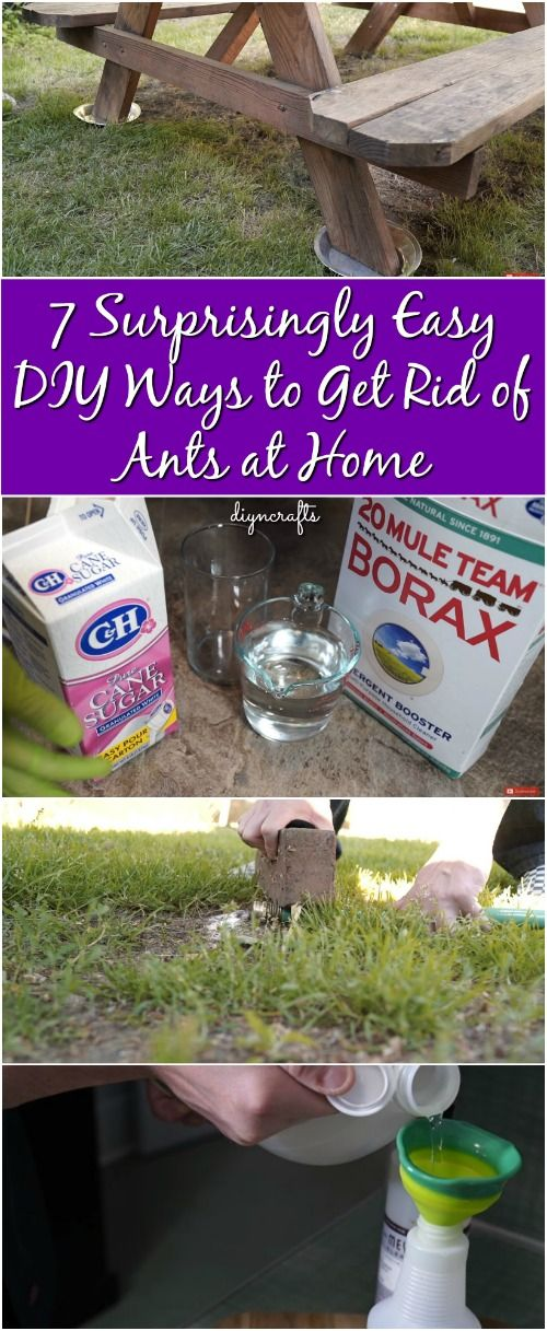 how to get rid of ants outside on patio