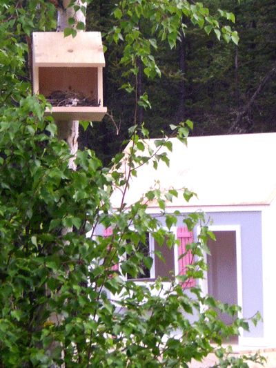 Robin Nest Box Plans Woodworking Projects Plans