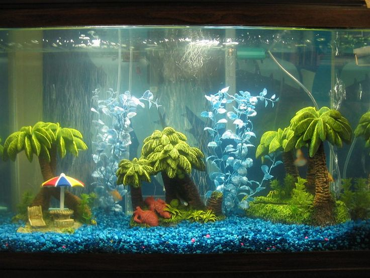 Decorating freshwater aquariums with themes fish for Cute fish tanks