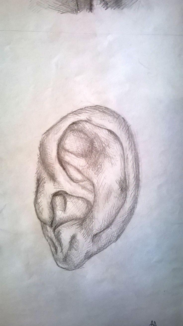Studio di un orecchio, matita - Ear study, pencil