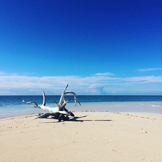 【umenoka9】さんのInstagramをピンしています。 《家族の記念旅行 #ニューカレドニア #newcaledonia #メトル島 #海 #空 #流木 #砂浜 #青い空青い海 #朝の時間 #朝の散歩 #自然》