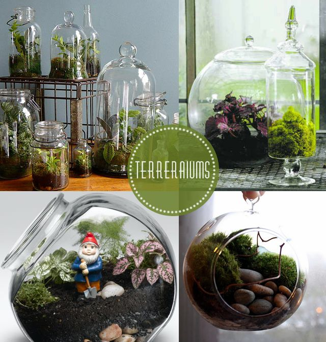 I've been interested in terrariums lately. I just think they are so lovely, little bottled ecosystems. I found these beautiful ones online, ...