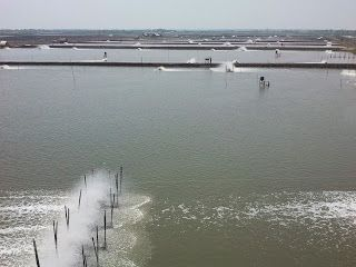 Shrimp Farming: Pond Preparation and Management